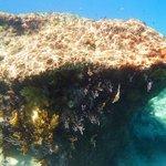 boiler reef