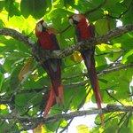 Marvellous macaws