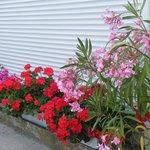 Des fleurs pour orner la devanture