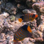 underwaret Biyadhoo reef 8