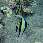 Four Winds Snorkel Tour