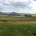 Customised tours of the Cape Winelands