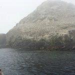 Vue de l'Ile Rouzic, avec ses milliers de Fous de Bassan