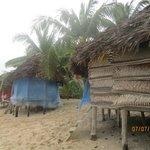 Fales(post cyclone damage)