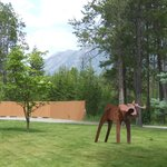 Resident moose yard art