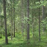 Naturreservatet Skurugata & Skuruhatt