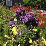 Gorgeous summer flowers opposite cabin