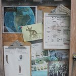 Field Station Bulletin Board that gives facts about the different dinosaurs