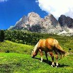 i cavalli del rifugio