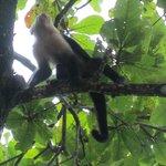 Monkey on grounds
