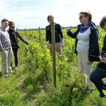 Learning about the vines