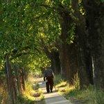 Un paseo por la plaza de Isla de Yaquil