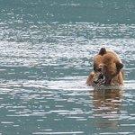 Nous avons passé beaucoup de temps avec cet ours...