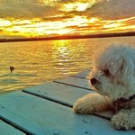 Dillmans sunset at dock with dog