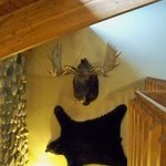 The only moose & bear we saw during our stay :-)