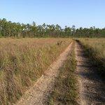 The trail in sawgrass prairie