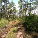 The trail in Slash Pine forest