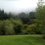 Tilden Regional Park botanical garden