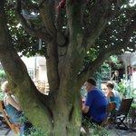 Dining in the lush secret garden