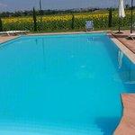 meravigliosa piscina con vista sui girasoli