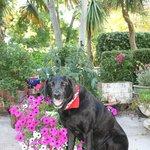 Henry enjoying the beautiful gardens