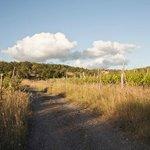 Anfahrt zwischen Weinreben