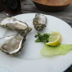 Ballimore Oysters