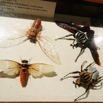 An impressive insect collection