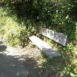 There are a few benches. Mostly I just like taking pictures of them!