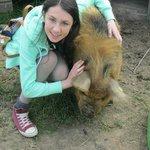 My sister playing with the pigs