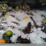 fresh fish2
