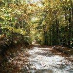 Higgins Hill Fall Driveway