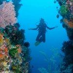 Komodo Dive Center