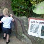 Alice log tunnel