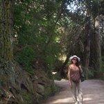 Camino al arroyo por el bosque