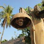 coconut lights