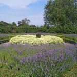 the lavender, take care with the bees!