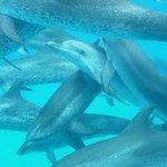 ein Delphinpot
