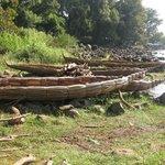 barche di papiro sul lago tana