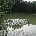 L'étang du Moulin de Bray