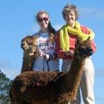 Alpaca Beach Walk