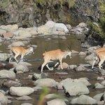 Eland (on our walk)