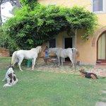 Extérieurs : Piscine, chevaux .....
