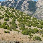 Pryor Mt. Wild Horse Range