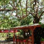 100 yasındakı dut ağacının altında yemek  keyfi ve huzur