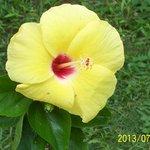Beauty in bloom II