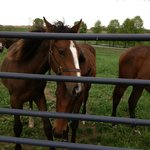 Horses greeting winery customers