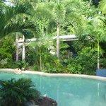 Beautiful rainforest garden