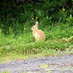 The wild 'Blonde Bunnies' of Glendaruel