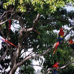 You don't have to go far to see macaws